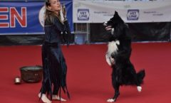 Stage Dog Dance Schettino ballo