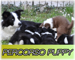 percorso puppy