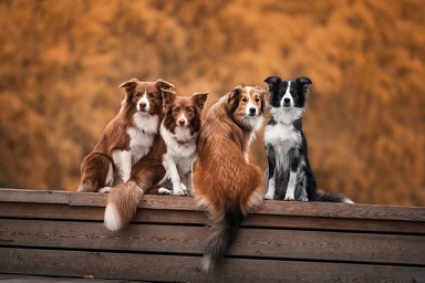 dogs-on-wooden-surface-3141394